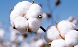 raw-cotton-balls